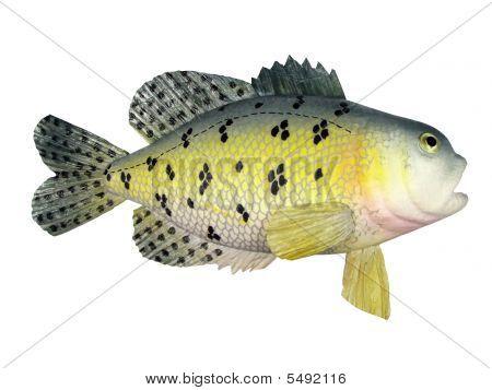 Fish Souvenir