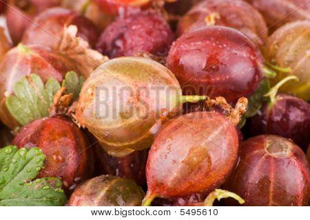 Gooseberries Macro