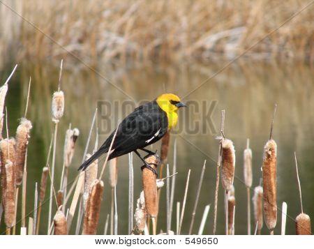spring bird poster