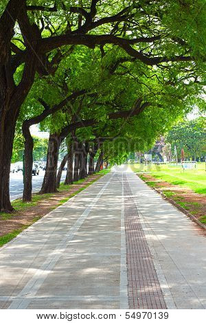 Beautiful Alley Of The Park With Green Trees
