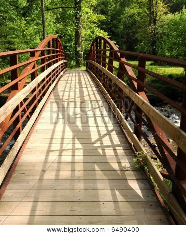 Bridge Into A Lush Forest