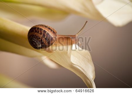 close up of a garden snail crawling on plant poster