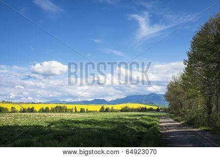 Filed Road