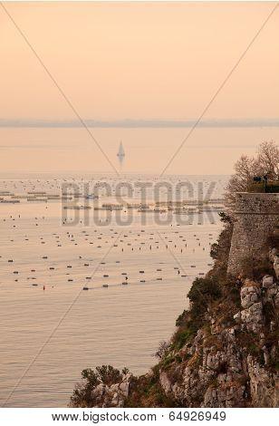 Mussel Farming, Trieste
