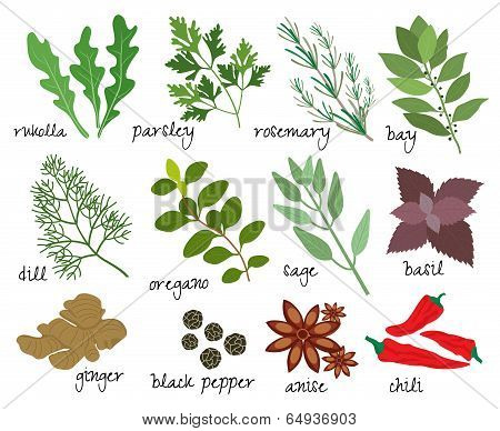 vector herbs and spices