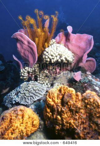 Dominica Reef
