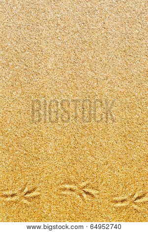 Sand yellow background with little bird traces poster