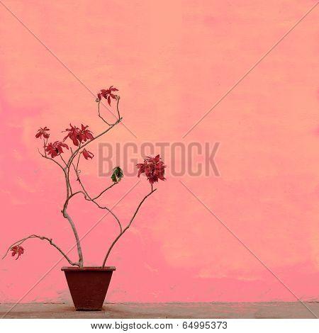 Nature Art Background