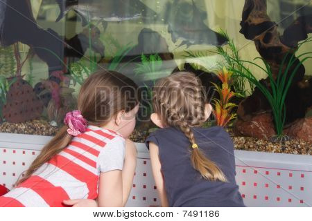 Girls At Aquarium