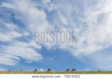 Sheep On Dike On Texel With  Clouds