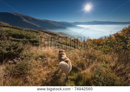 Mountain landscape - Faithful dog watching into the sun at dawn poster