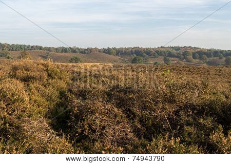 Looking out over Dutch heathland