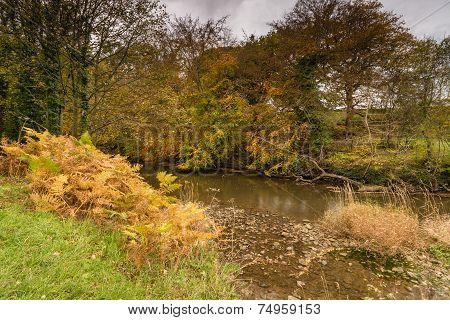 River Blyth Flows Through Plessey Woods