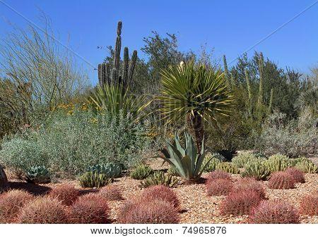 Desert Cactus Garden in Phoenix