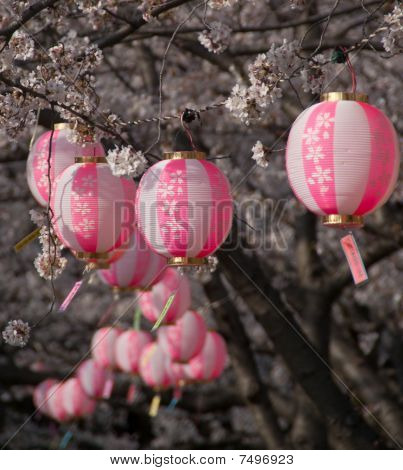 Cherry Blossoms And Round, Pink Lanterns At A Cherry Blossom Festival In Osaka, Japan