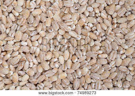 food background of beige grain barley closeup poster