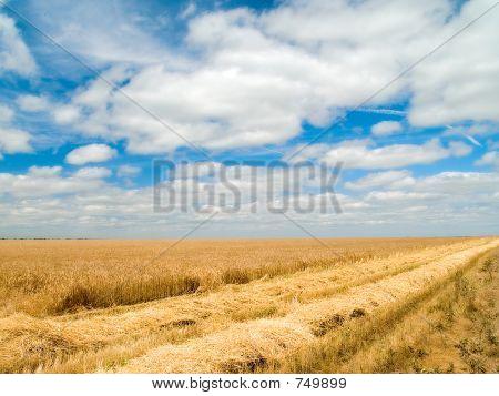 Don fields 02