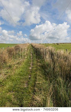 Path Texel