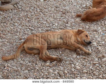 Stray dog lying on the ground