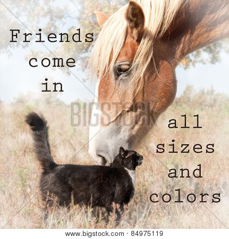 Friends come in all sizes and colors - text with an image of a blond belgian draft horse snuggling with a small black and white cat