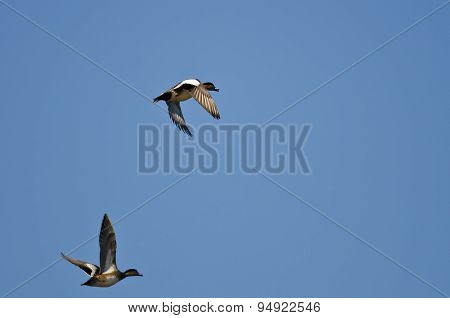 Pair Of American Wigeons Flying In A Blue Sky