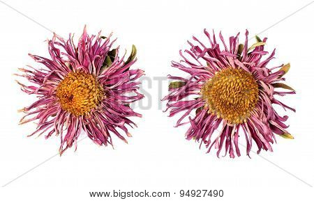 Dried Flowers On White