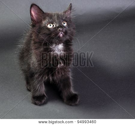 Young Black And White Cat