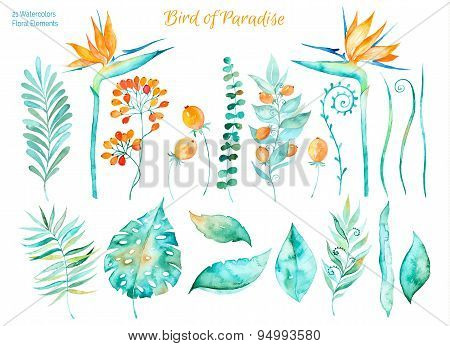 Vector floral set.Colorful floral collection with tropical leaves and flowers strelitzia,drawing wat