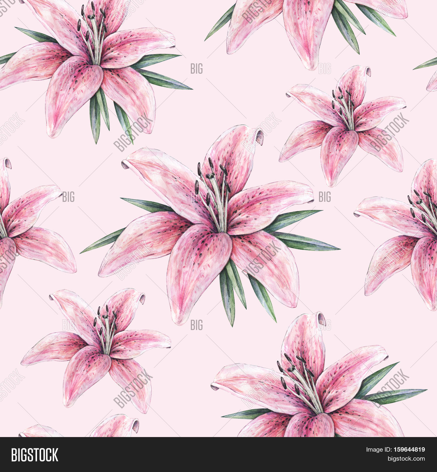 Pink lily flowers image photo free trial bigstock pink lily flowers isolated on pink background watercolor handwork illustration drawing of blooming lily izmirmasajfo
