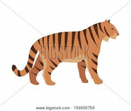 Tiger Panthera tigris cartoon isolated on white. Largest cat species, most recognisable for pattern of dark vertical stripes on reddish-orange fur with lighter underside. Sticker for children. Vector