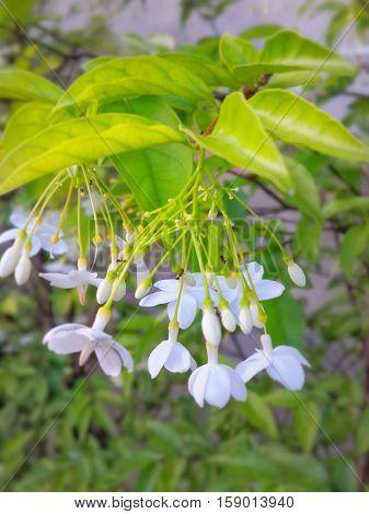 white flower look breezy in morning time