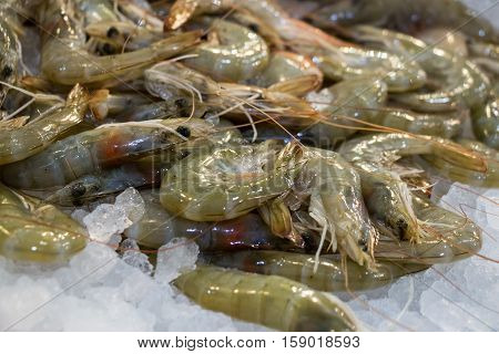 Freshly caught shrimps or Parapenaeus longirostris on the counter with ice at the fish shop. The raw shrimps on ice in fish shop for sale. Horizontal. Close up. Selective focus.