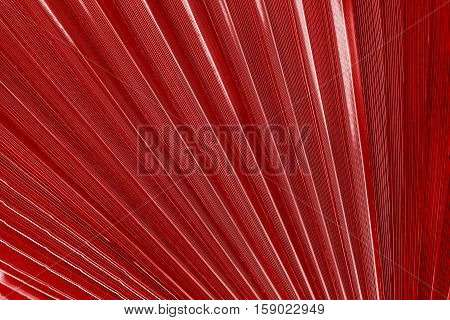 corrugated texture of a palm leaf of red color closeup or corrugated fan lines for an abstract background