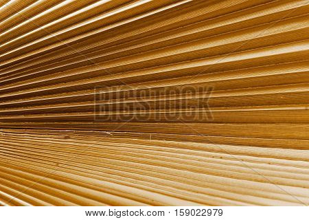 corrugated texture of a palm leaf of brown color closeup or corrugated fan lines for an abstract background
