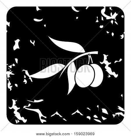 Fresh olive tree branch with olives icon. Grunge illustration of fresh olive tree branch with olives vector icon for web