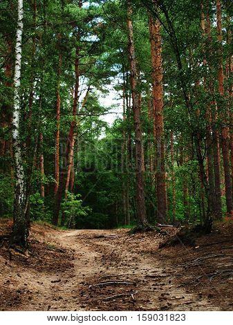 Natur. Wald. Bäume. Weg. Ein Spaziergang. Urlaub.