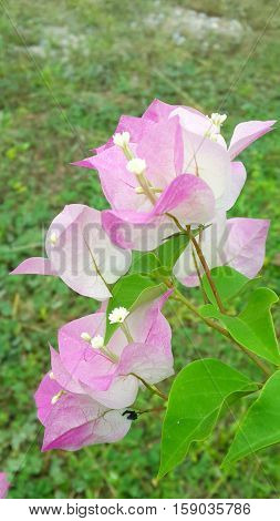 pink flower in morning time look breezy