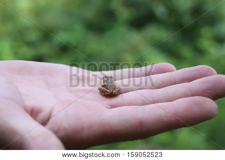 A little frog sitting on the human hand