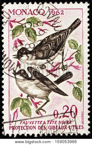 LUGA RUSSIA - NOVEMBER 29 2016: A stamp printed by MONACO shows Eurasian Blackcap (Sylvia atricapilla) usually known simply as blackcap - a common and widespread typical warbler circa 1962