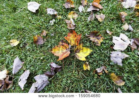 Fisheye vew of colorful leaves on grass