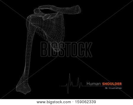 Illustration On Human Anatomy, Shoulder Isolated Background
