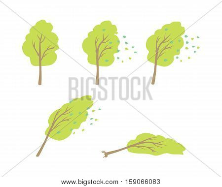 Hurricane wind topple tree vector. Flat design. Strong wind blows the leaves, tilt crone, bending trunk, topple tree. Visual measurements wind strength. For weather concepts. On white background