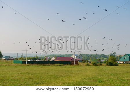 flock of birds over the green field in the village