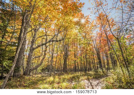 Dolly sods sunny colorful red forest during autumn in West Virginia