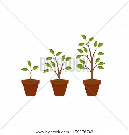 Abstract Flat Nature Plants Growth Graphic Design Background, Vector Illustration Eps10