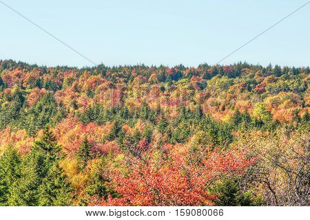 Sunny colorful red forest during autumn on mountain in West Virginia