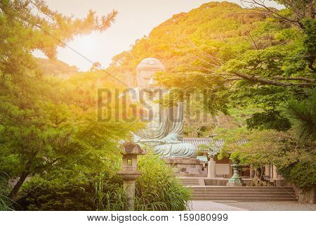 Maple trees on The Great Buddha (Daibutsu) background japan.