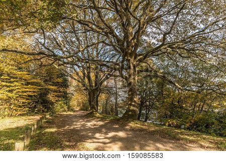 Shady path in autumn near of Erdre river (Nantes, Loire Atlantique)