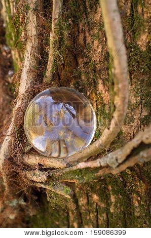 Magic crystal ball with gnarled tree vines fantasy