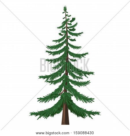 Vector Single Cartoon Pine Tree On White Background
